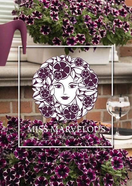 Miss Marvelous