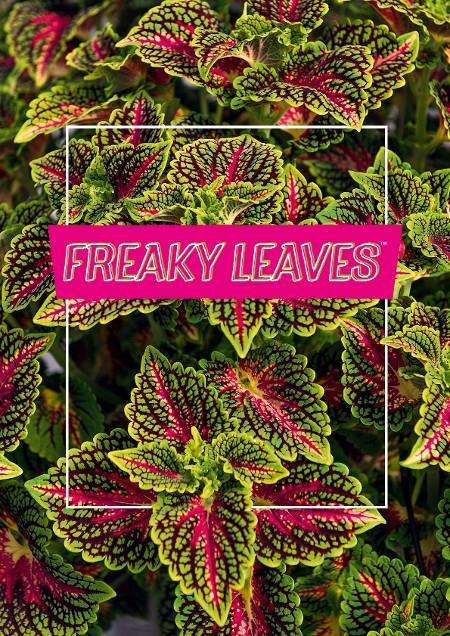 Freaky Leaves
