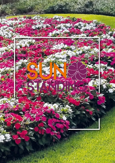 Sunstanding