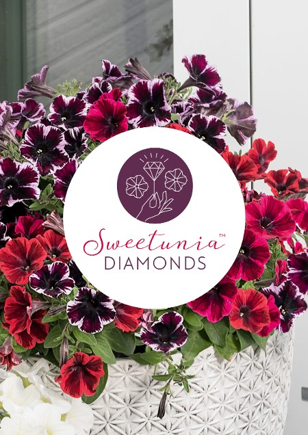 Sweetunia Diamonds